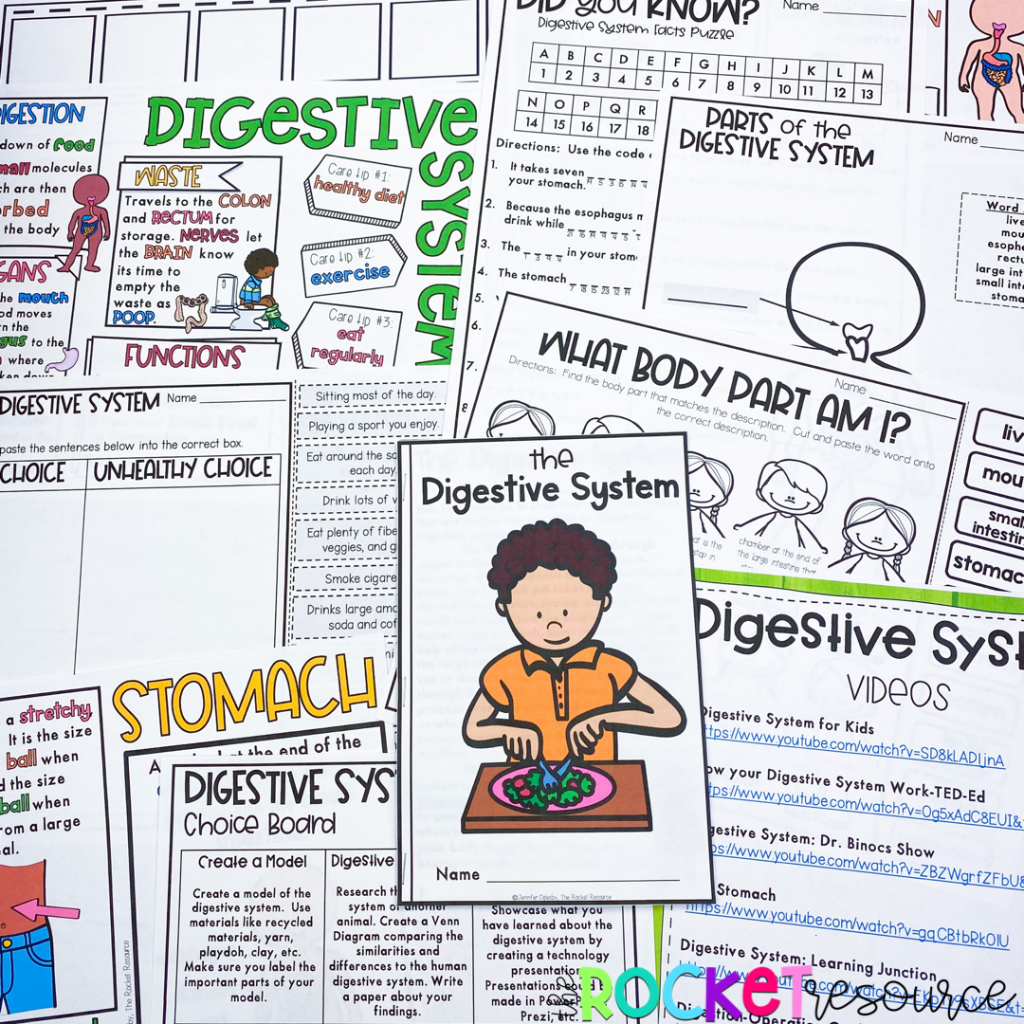 Digestive System for grade 3 Digestive System for grade 4