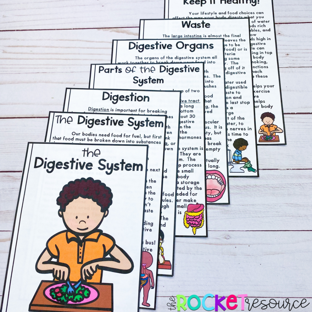 What does the digestive system do?