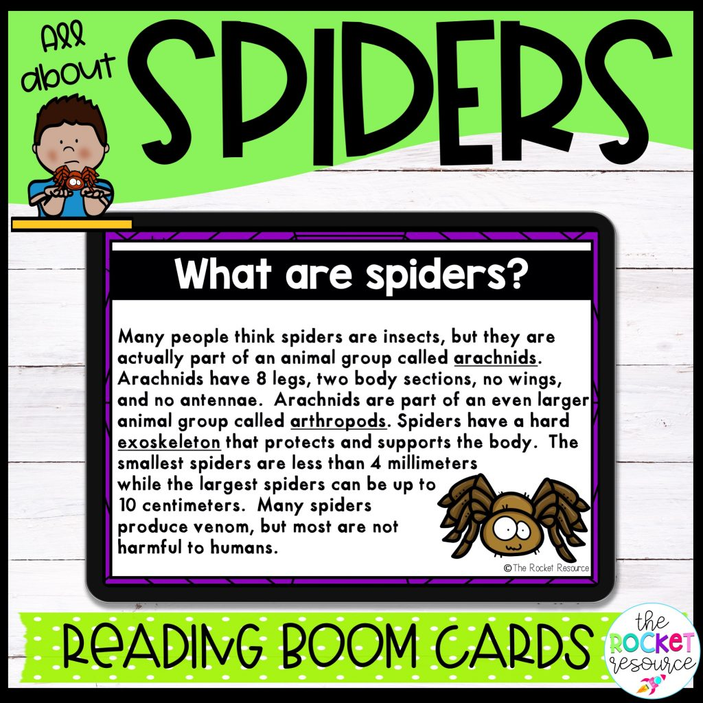 spiders boom cards