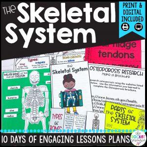 skeletal system for kids